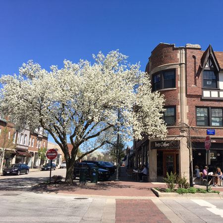 Exterior of Peet's coffee and a flowering tree
