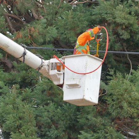 Electric worker trimming trees